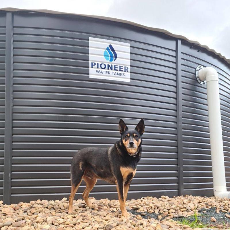 dog in front of rainwater tank in Welshpool, Perth Western Australia